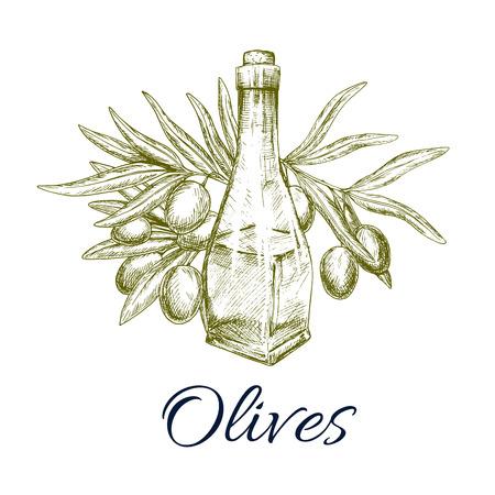 food ingredient: Green olive tree branch and olive oil bottle vector sketch. Design of fresh olives fruits bunch for vegetarian food salad flavoring ingredient or vegetable seasoning product package Illustration