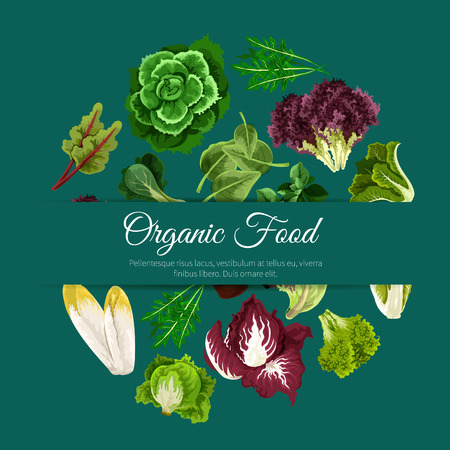 Lettuce salad vegetables of vector chicory and spinach, arugula, kale, lollo rossa and radicchio, romaine and pak choi or sorrel, swiss chard batavia. Vegetarian organic food poster Illustration