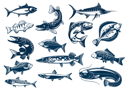 Fish vector tuna, pike and marlin, perch, bream, salmon and flounder, carp and mackerel sprat, sheatfish or catfish. Fishes blue symbols set for seafood restaurant, fishing club Ilustrace