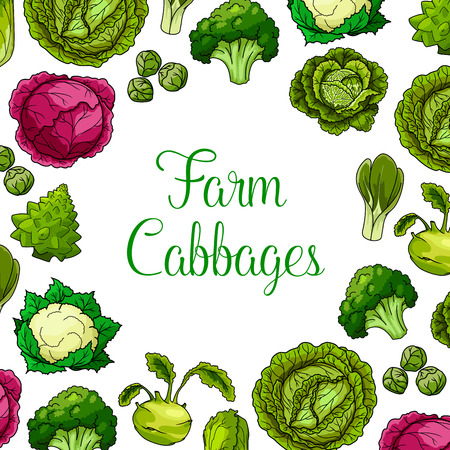 Cabbages vector vegetables with white and red cabbage, romanesco, kohlrabi and brussels sprouts, cauliflower, chinese cabbage and pak choi and scotch kale. Vegetarian or vegan leafy veggies Ilustração