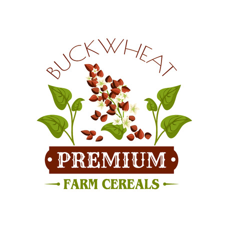 food ingredient: Buckwheat vector icon or poster. Cereal grass plant with grain seeds and leaves. Design for farm store symbol, diet nutrition food package, porridge ingredient and grocery market or shop