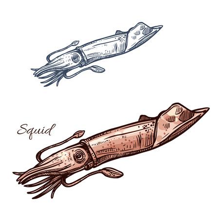 오징어 스케치 벡터 아이콘입니다. 오징어 또는 바다 오징어 연체 동물 종. 해산물 레스토랑 기호 또는 상징 낚시 스포츠 클럽이나 어업, 바다 음식과 생선 시장이나 상점에 대한 격리 된 기호