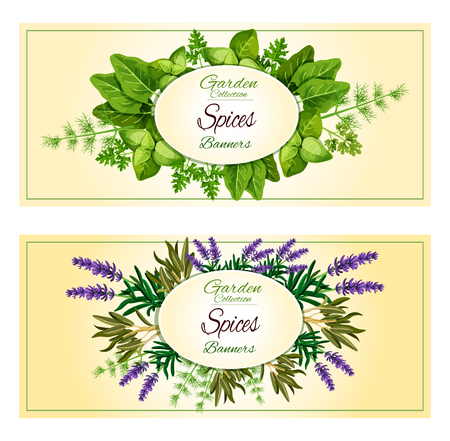 cilantro: Spicy garden herbs or herbal seasonings and spices vector banners of lavender and sorrel, savory, tarragon, parsley or thyme, cilantro, basil and dill, oregano, rosemary and sage, mint and bay leaf Illustration
