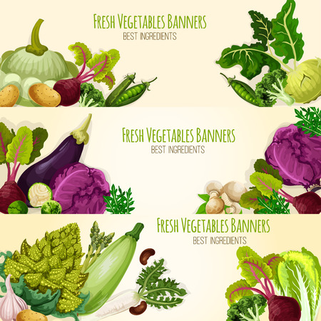 Vegetable banners of fresh organic veggies cabbage and romanesco , kohlrabi and beet, eggplant, zucchini, radish and mushrooms, arugula, pea and garlic, potato. Vegetarian farm food harvest