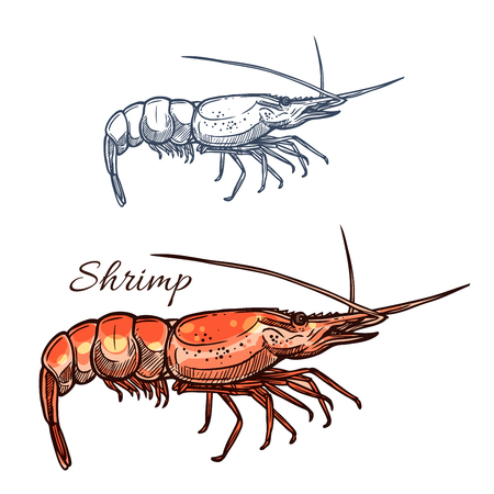 food industry: Shrimp sketch vector icon. Prawn seafood and marine ocean shellfish or crustacean mollusk. For restaurant sign or emblem, fishing sport club or industry, sea food and fish market or shop