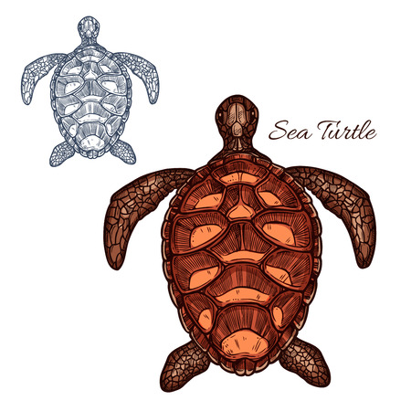 bony: Turtle vector icon of marine sea or ocean reptile tortoise or terrapin with carapace bony or cartilaginous shell. Isolated turtle with detailed shell pattern for zoo, pet shop emblem or zoology symbol Illustration