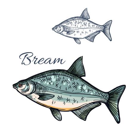 Poisson croquis de brème. Espèces de poissons marins d'eau douce de porgy ou de pomfret. Symbole isolé pour signe de restaurant de fruits de mer ou emblème, club de sport de pêche ou industrie de la pêche, marché aux poissons ou magasin Vecteurs