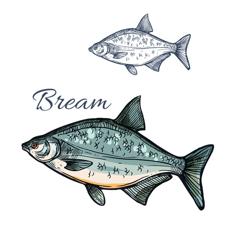 Bream sketch fish. Freshwater marine fish species of sea porgy or pomfret. Isolated symbol for seafood restaurant sign or emblem, fishing sport club or fishery industry, fish market or shop