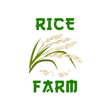 food ingredient: Rice icon or poster of cereal grass plant or grass with rice seeds. Design for farm store, diet nutrition or staple food package, porridge ingredient or cuisine grocery market or shop emblem
