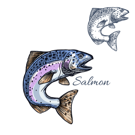 Salmon sketch fish icon. Isolated humpback or pink salmon or sockeye marine ocean or sea fish species. Isolated symbol for seafood restaurant sign or emblem, fishing club or fishery market Illustration