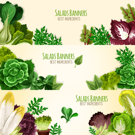Lettuce salads and vegetables banners of mangold kale or collard, chicory and spinach, arugula, lollo rossa and radicchio, romaine and pak choi or sorrel, swiss chard batavia and gotukola Illustration