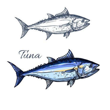 マグロは、スケッチを分離しました。魚介類包装ラベル、魚の大西洋クロマグロ タニー法律事務所市場シンボルまたはレストランのメニュー デザイ