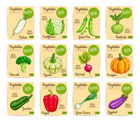 Organic vegetables card, label set. Fresh bell pepper, green onion, broccoli, eggplant, radish, zucchini, cauliflower, pumpkin, beet, pea, kohlrabi, squash veggies for price tag, food packaging design Иллюстрация
