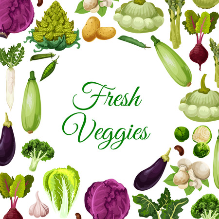 Fresh vegetables, mushroom and beans poster, vegetarian food menu background. Cabbage, broccoli, potato, eggplant, garlic, champignon, asparagus, bean and pea pod, beet, daikon radish, zucchini