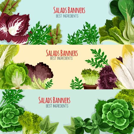 Salads and leaf vegetables banner set. Green lettuce, cabbage, spinach, cress salad, cos lettuce, bok choy, iceberg lettuce, chicory, radicchio, arugula, chard and batavia fresh leaves for food design