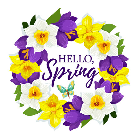 Hello Spring poster of daffodils floral wreath or narcissus bunch for springtime holiday design. Vector greeting card element of spring blooming crocus floral bouquet and butterfly