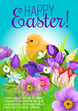 passover and easter chick: Happy Easter vector design poster or greeting card. Spring flowers bunch of crocuses, daffodils and chicken chick in springtime tulips field. Easter holiday or holy Resurrection religion celebration
