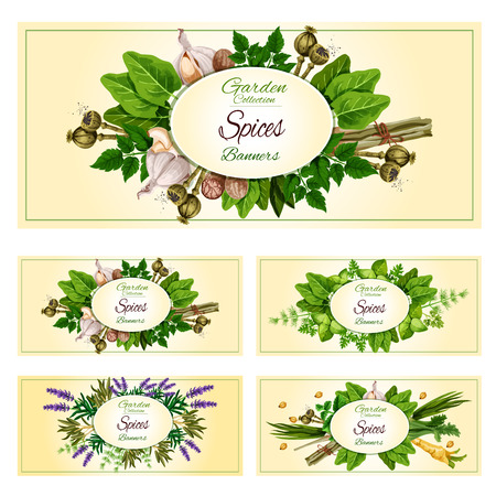 Fresh herbs and spices banners. Natural organic rosemary and parsley, mint, basil and dill, garlic, nutmeg, green onion and celery, cardamom and fennel, sage, lemongrass, poppy, sorrel and lavender