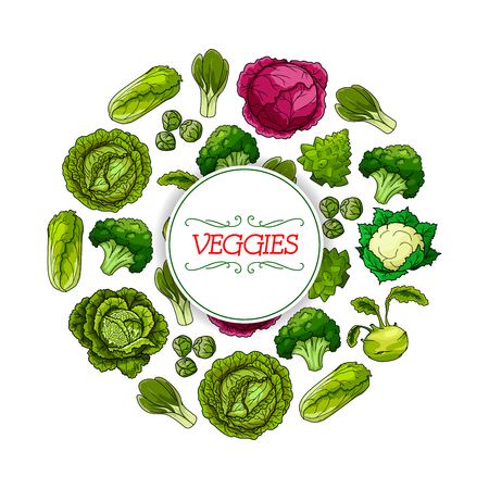Vegetable round symbol. Cabbage veggies poster with green cabbage, broccoli, cauliflower, kohlrabi, napa cabbage, bok choy, brussel sprouts and romanesco cauliflower. Food packaging label design