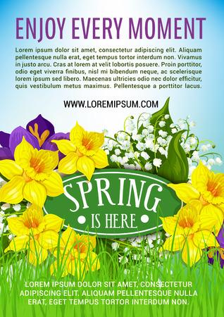De lente is hier poster van bloeiende bloemen en tros gele narcissen of narcissus en witte lelie van de vallei of krokussen op weide gras. Vector bloemenontwerp voor de lentevakantie