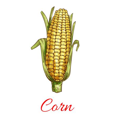 Graan plantaardige vector schets met bladeren. Vegetarische en veganistische keuken groente en landbouw rijpe oogst. Sweet corn maize-object voor supermarkt, boerenmarkt, verpakkingsontwerp
