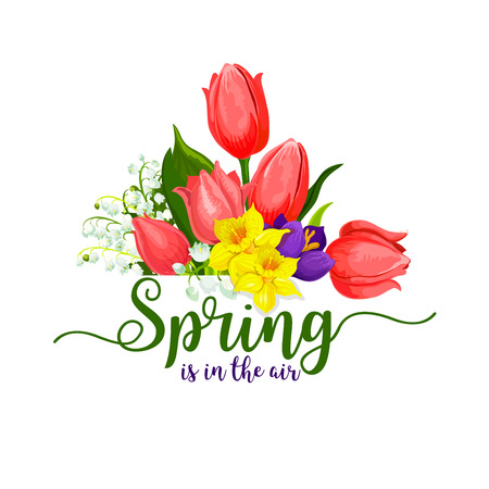 Spring is in the air design of red tulips and daffodils or crocuses flowers bouquet. Vector springtime floral bunch of yellow narcissus or snowdrops for Hello Spring holiday greeting card