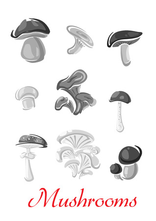 Mushrooms champignon, chanterelle vector icons