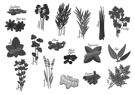 chive: Spices and herbs vector isolated icons