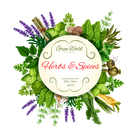 Fresh herbs and spices round label for food design Çizim