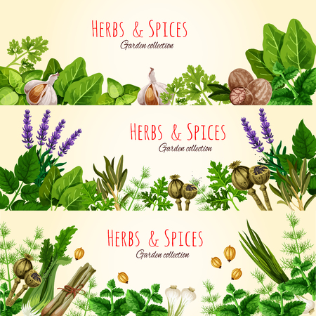 green herbs: Fresh green herbs and spices banner set Illustration