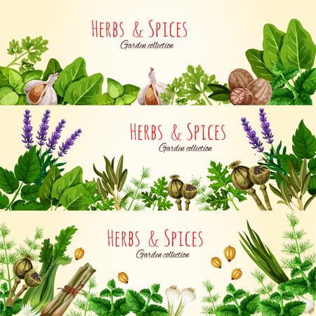 Verse groene kruiden en specerijen banner set Stock Illustratie