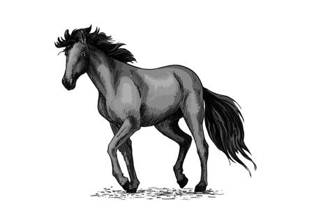 trot: Horse sketch of black arabian stallion