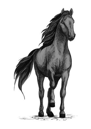 Horse mustang stomping hoof vector sketch