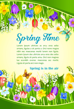 Spring Time greetings and blooming flowers field design. Vector blooming crocuses, spring tulip blossoms, butterfly on narcissus and daffodil petal blossoms for poster with springtime holiday quotes