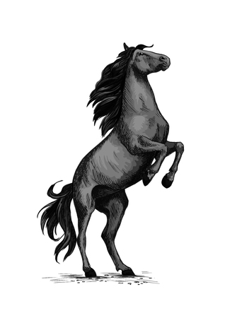 Wild horse racer rearing vector sketch Illustration