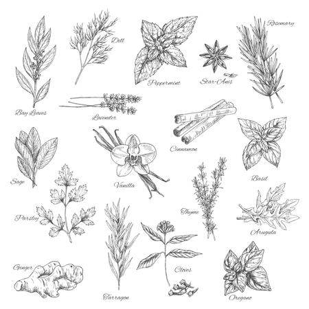 Kruiden en specerijen vector schets iconen