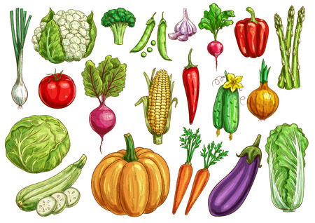 Vegetables isolated sketch set with fresh veggies Ilustracja