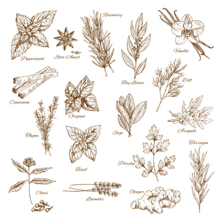 Herbs, spices and leaf vegetable sketch poster 向量圖像