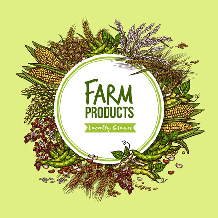 Cereal, vegetable and bean farm product poster