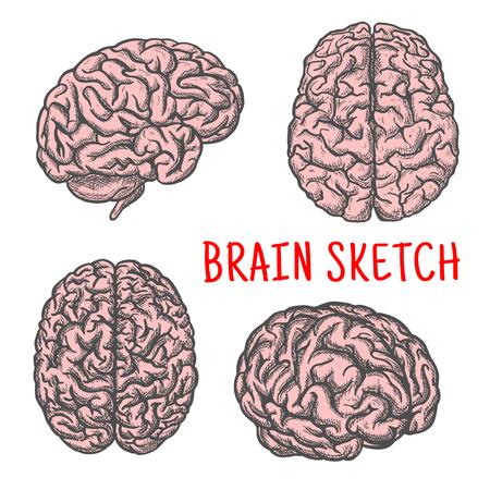 bocetos de personas: Human brain organ vector sketch icon