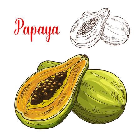 exotic fruit: Papaya exotic tropical fruit vector sketch icon