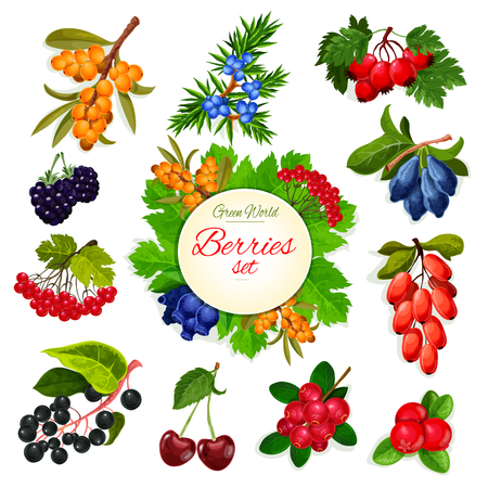 Vector icons set of berries and wildberry fruits