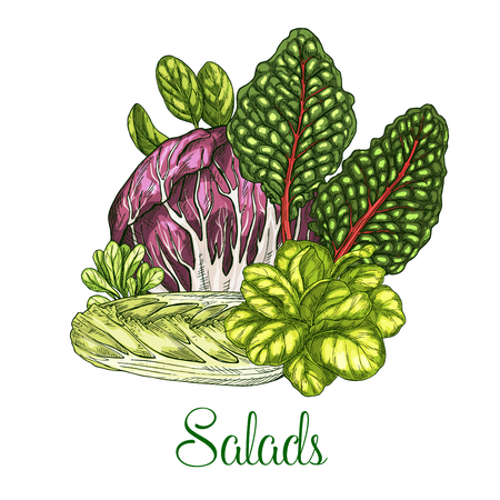 Salads and leafy vegetables vector poster.