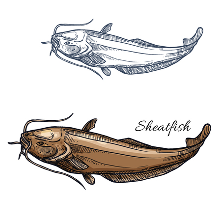 burbot: Sheatfish fish vector isolated sketch icon.
