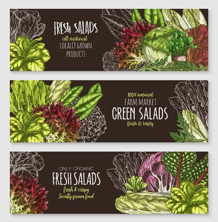 Salate und Blattgemüse Vektor Banner gesetzt. Standard-Bild - 75669392