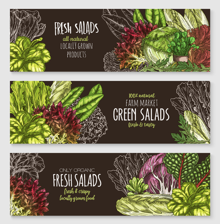 Salads and leafy vegetables vector banners set. Illustration