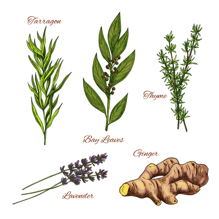 Vector sketch icons of spices and herbs