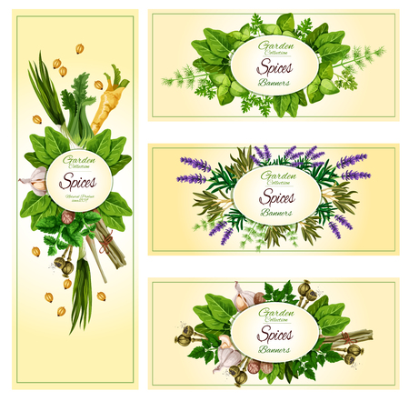 Vecor banners of garden spices and herbs