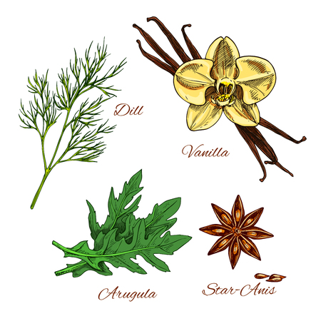 dressing: Herbs and spices vector icons with aroma dessert bakery vanilla, dill and arugula salad dressing condiments, spicy anise star seeds for culinary cuisine. Illustration