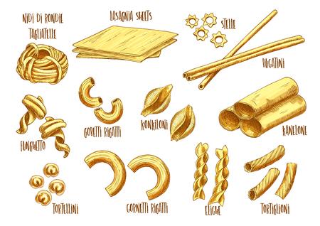 Italian pasta vector sketch set of Italian nidi di rondi or tagliatelle, lasagna sheets and stelle, bucatini and funghetto sort, gobetti rigatti or konkiloni and kanelone or tortellini Illustration